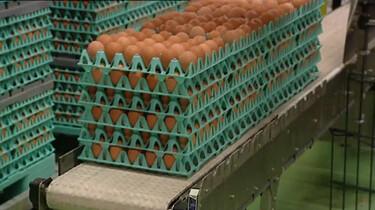 Hoe worden eieren ingepakt?