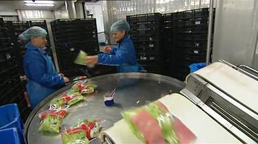 Hoe wordt groente verpakt?