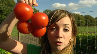 Waar komt de tomaat vandaan?