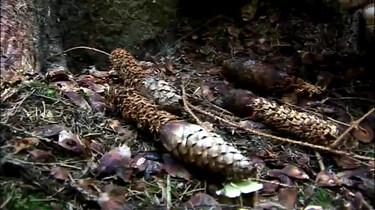 Hoe vind je bewijs van wilde dieren in het bos?