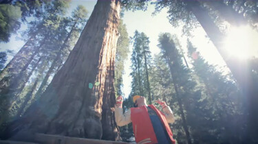 Wat is de grootste boom ter wereld?
