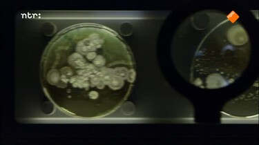 De Kennis van Nu in de klas: Eert uw bacteriën