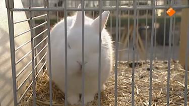 De Buitendienst van nieuws uit de natuur: Dierenrechten