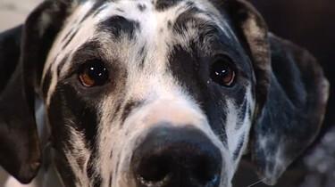 Waaraan kun je zien dat een hond zielig is?