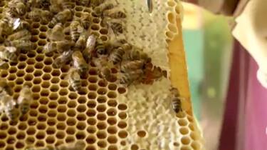 Keuringsdienst van Waarde in de klas: Honing