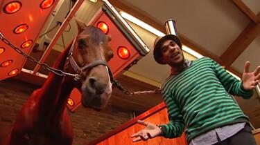 Wat doen paarden in hun vrije tijd?: Douchen, eten en grazen