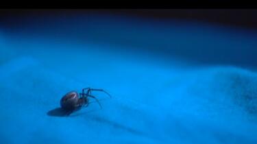 Eet je spinnen in je slaap?