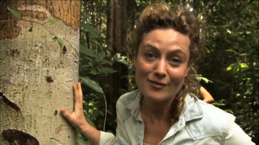 Het Klokhuis: Orang-Oetan: leefgebied