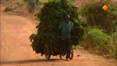 Het Klokhuis: Kinderarbeid