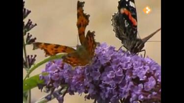 Huisje Boompje Beestje: Van ei tot vlinder