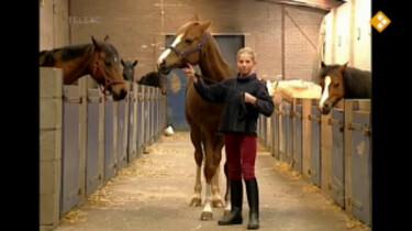 Huisje Boompje Beestje: Mijn pony heet Nathalie