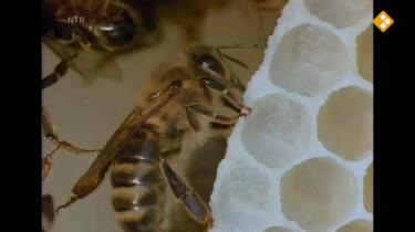 Huisje Boompje Beestje: Bijen