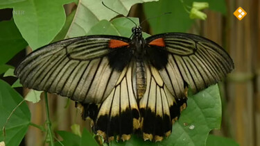 Huisje Boompje Beestje: Vlinders