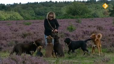Huisje Boompje Beestje: De hond en de wolf