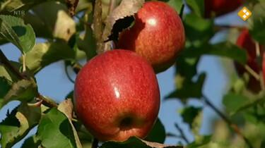 Huisje Boompje Beestje: De appelboom