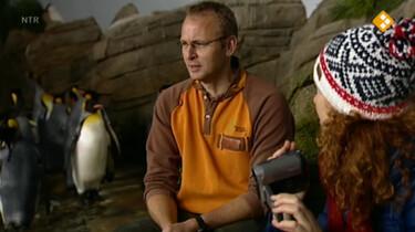 Huisje Boompje Beestje: De pinguïn
