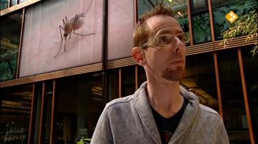 Huisje Boompje Beestje: Ga weg mug!