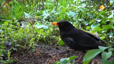 Huisje Boompje Beestje: Vogels om het huis