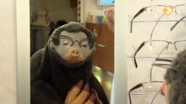 Koekeloere: Ik zie, ik zie wat jij niet ziet