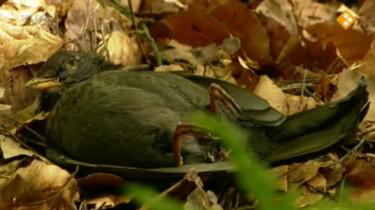 Koekeloere: Dag vogeltje