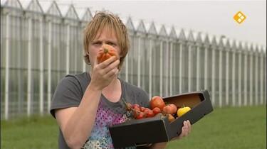 Het Klokhuis: Tomatenkwekerij