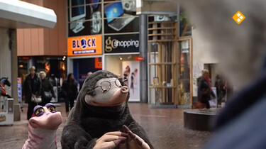 Koekeloere: Sinterklaas (deel 2 - 2012)