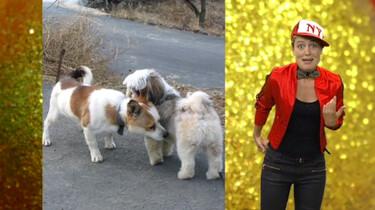 Waarom snuffelen honden aan elkaars kont?: Aan de geur herkennen ze de hond