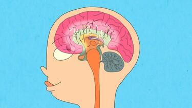 Wat gebeurt er in de puberteit in je hersenen?