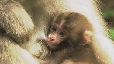 Hoe leren apen springen en klimmen?