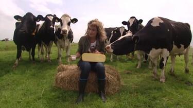 Hoe wordt kaas gemaakt?: Melk met zuursel, stremsel en zout