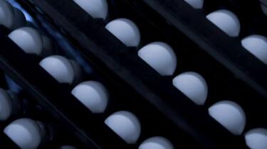 Kan er in een ei uit de supermarkt een kuiken zitten?: Pas als een ei bevrucht is, groeit er een kuiken in