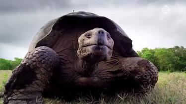 Galapagos in de klas: De reuzenschildpad