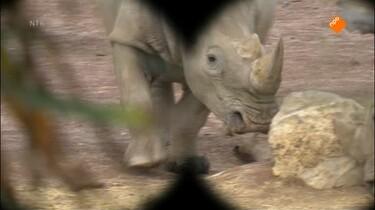 Het Klokhuis: Nijlpaard