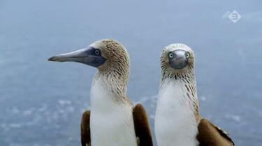 Galapagos in de klas: Aangepaste vogels