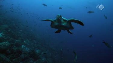 Galapagos in de klas: Het zeeleven rond Galapagos