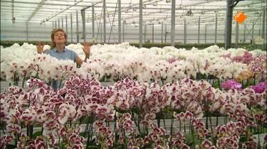 Het Klokhuis: Orchidee