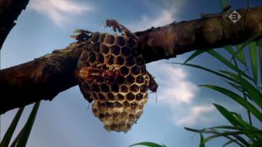 Micro Monsters in de klas: Familiebanden bij insecten