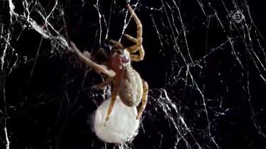 Micro Monsters in de klas: De voortplanting van spinnen