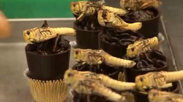 Kun je insecten eten?