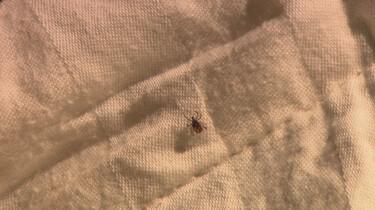 Het Klokhuis: Ziekte van Lyme