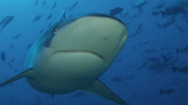 Haaien hebben het moeilijk