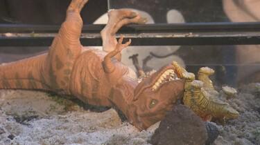 Uitsterven van dinosaurussen