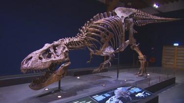 Een groot skelet van een T-Rex