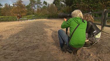 Het Klokhuis: Paardenfotograaf