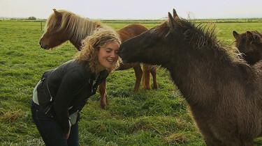 Het Klokhuis: IJslands paard
