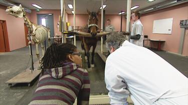 Het Klokhuis: Paardenonderzoek