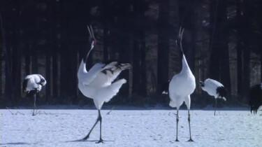 De Japanse kraanvogel