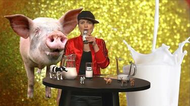 Waarom drinken we geen melk van varkens?