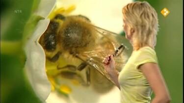 Het Klokhuis: Bijen