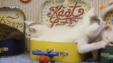 Poesjes: Kattenlaan 9